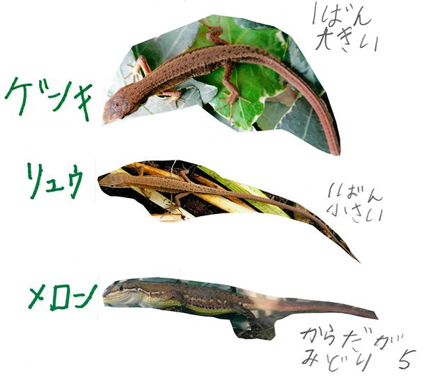 オスメス カナヘビ カナヘビの産卵の回数や時期や場所について !